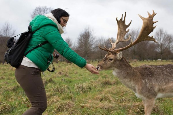 Woman feeding reindeer